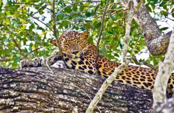 Sri Lanka Wildlife Wonders