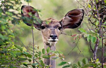 South Luangwa and Victoria Falls safari