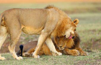 South Luangwa and Lower Zambezi safari