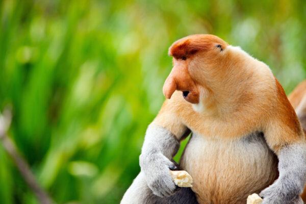 Kinabatangan Wildlife Reserve