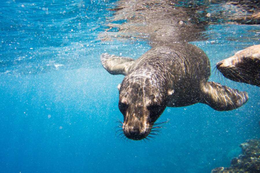 010 Galapagos Sea Lions