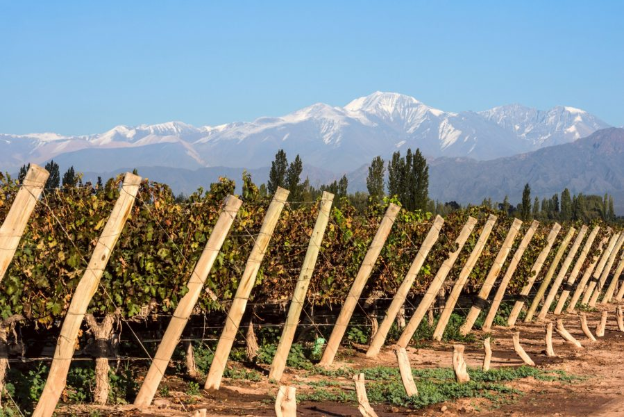 Argentina Mendoza Volcano Aconcagua Cordillera and Vineyard