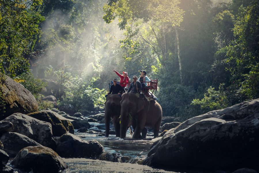 Cambodia laos elephanttrekking