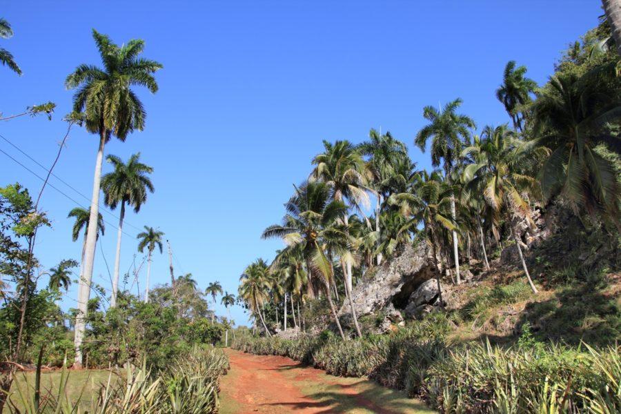 Cuba_Baracoa_trees