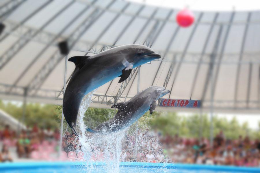 Dolphinarium3