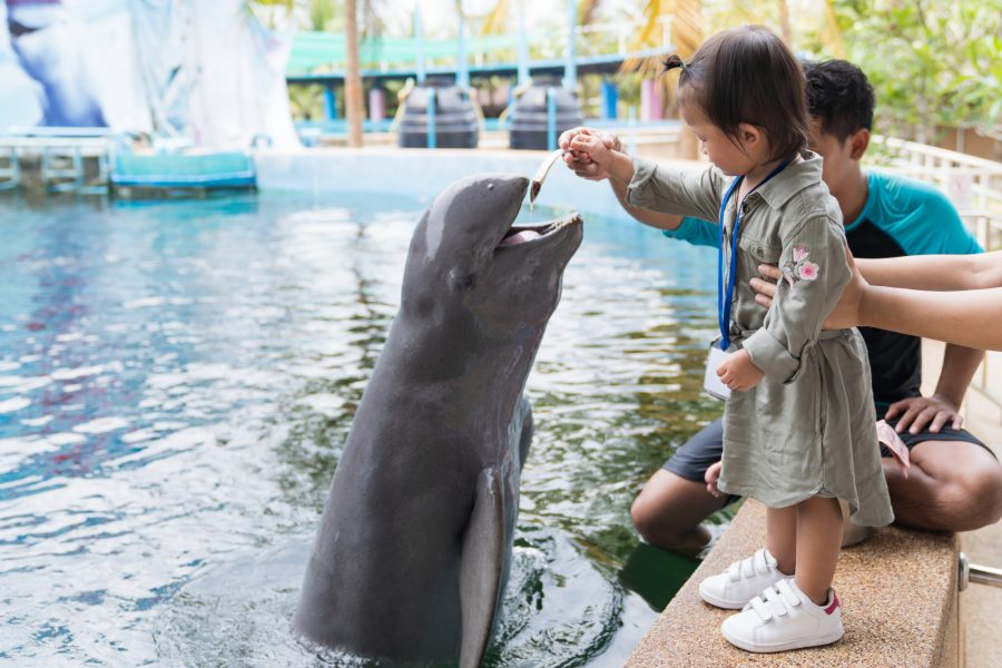Dolphins girl feeding