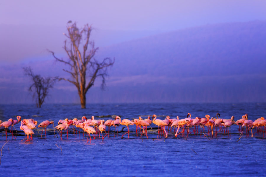 Kenya_Lake Nakuru2