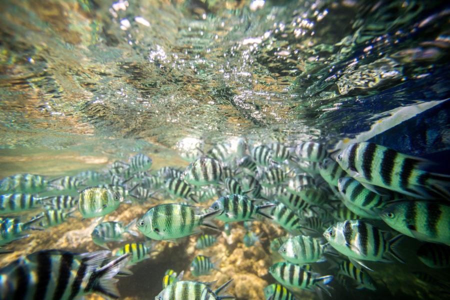 Kenya_underwater