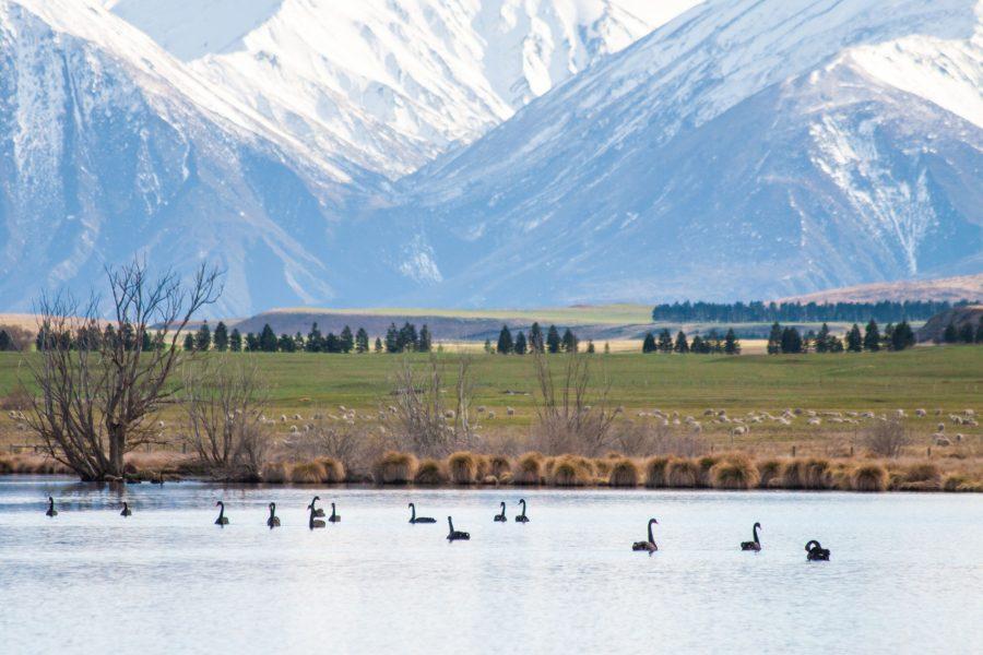 NZ Lake Heron Ashburton Lakes2