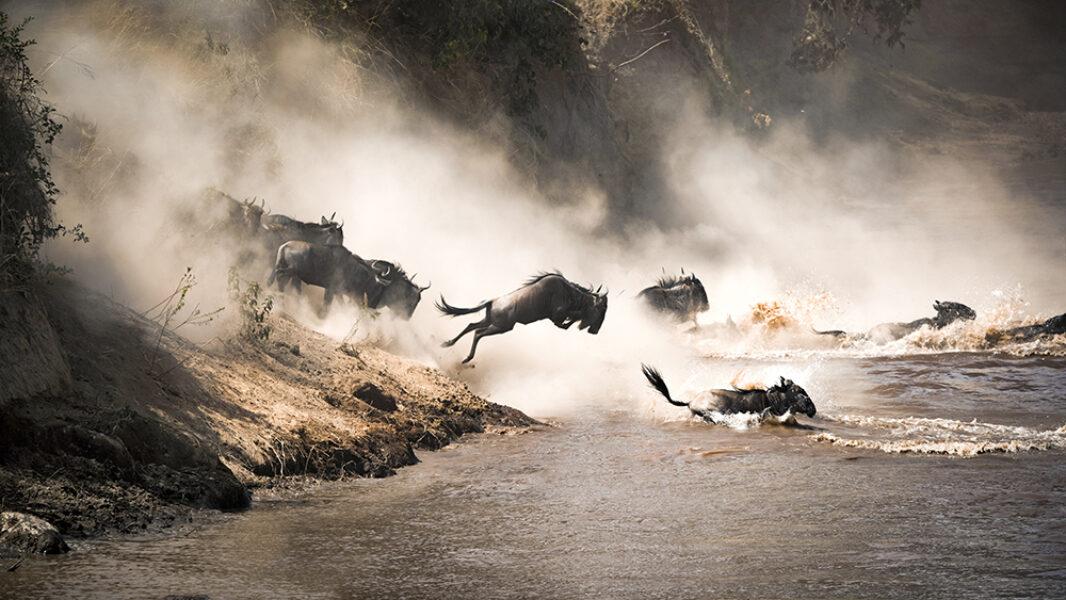 Tanzania Wilderbeastcrossing