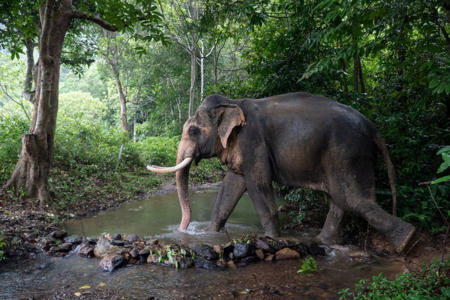 Wap elephants thailand