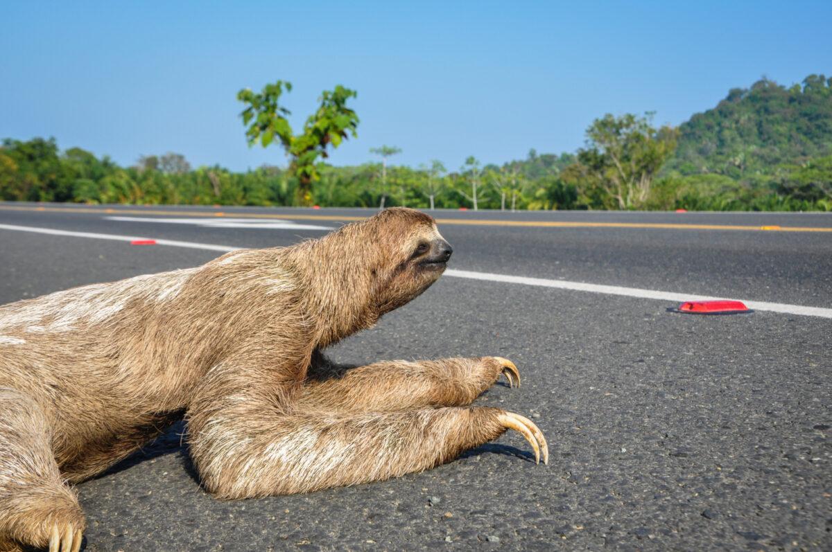 Costa-Rica_Corcovado_Sloth