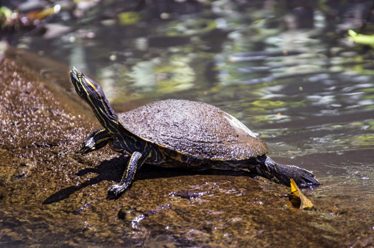 Costa-Rica_Tortuguero National Park