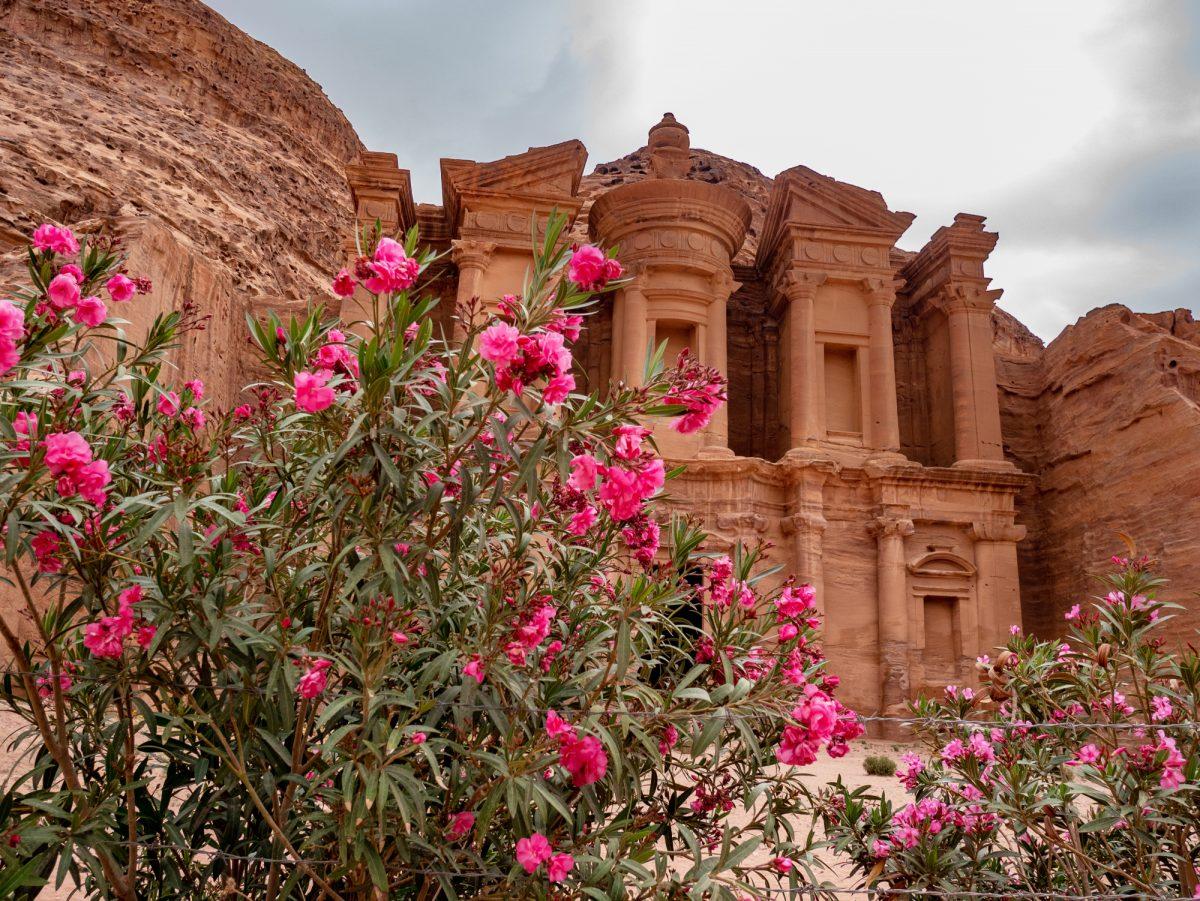 Jordan_petra_flowers