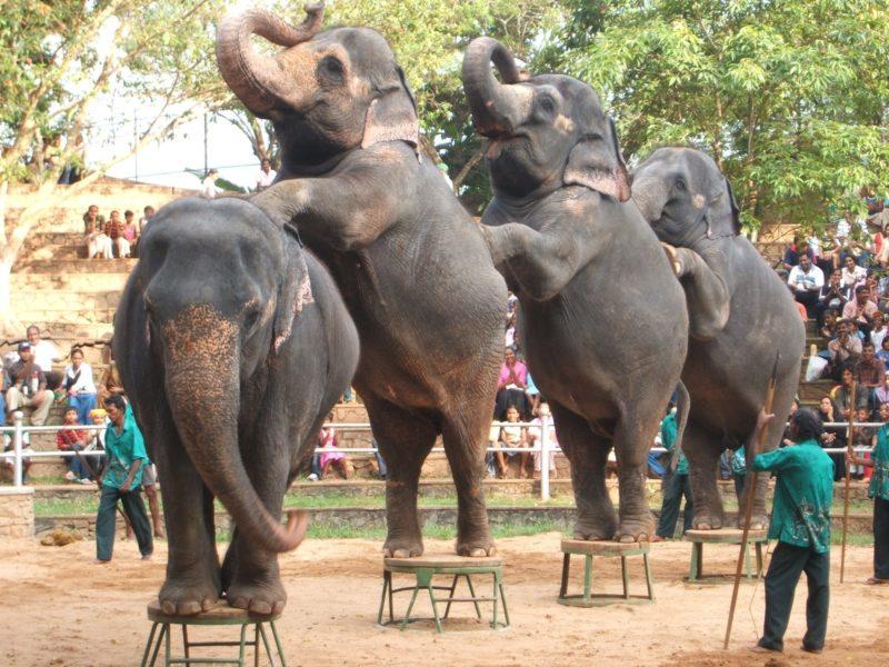 017-Peforming-Elephants-©-Born-Free-Foundation