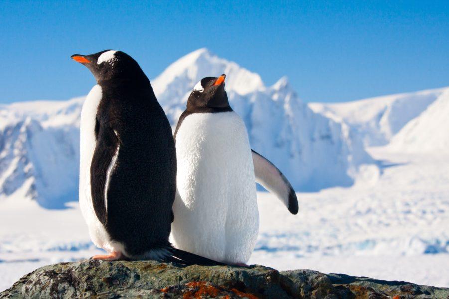 030-Antarctica-123Rf-11156149_Xl