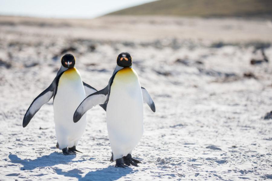 Antarctica_penguins