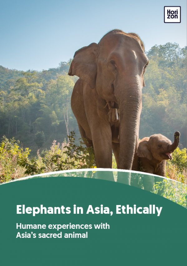 Should Elephant Riding Be Illegal?