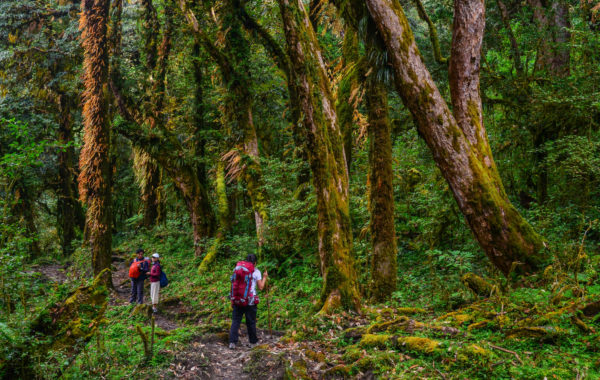 Explore the forests of Makalu