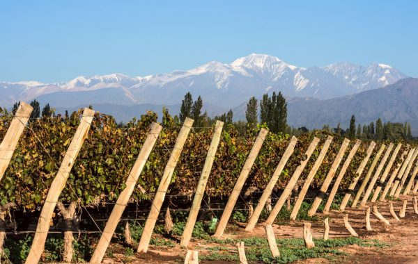 Cycle the vineyards of Mendoza