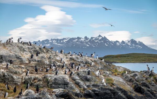 Birdwatching in Patagonia