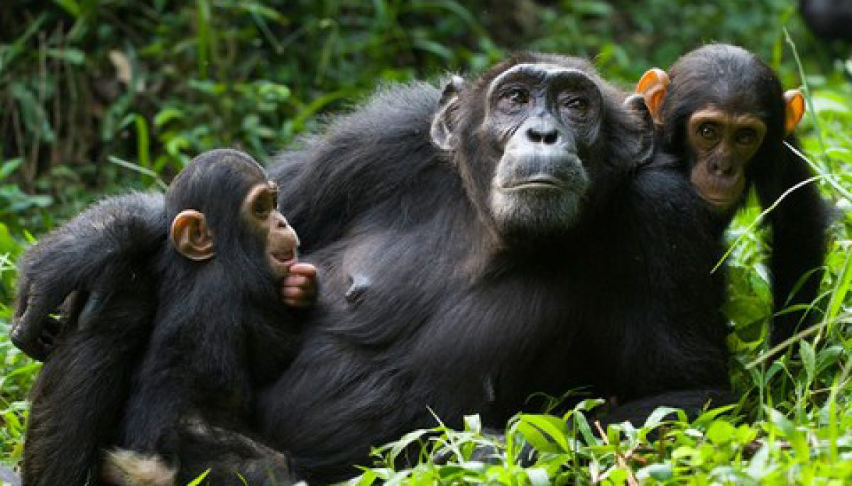 Rwanda Eco Company Safaris
