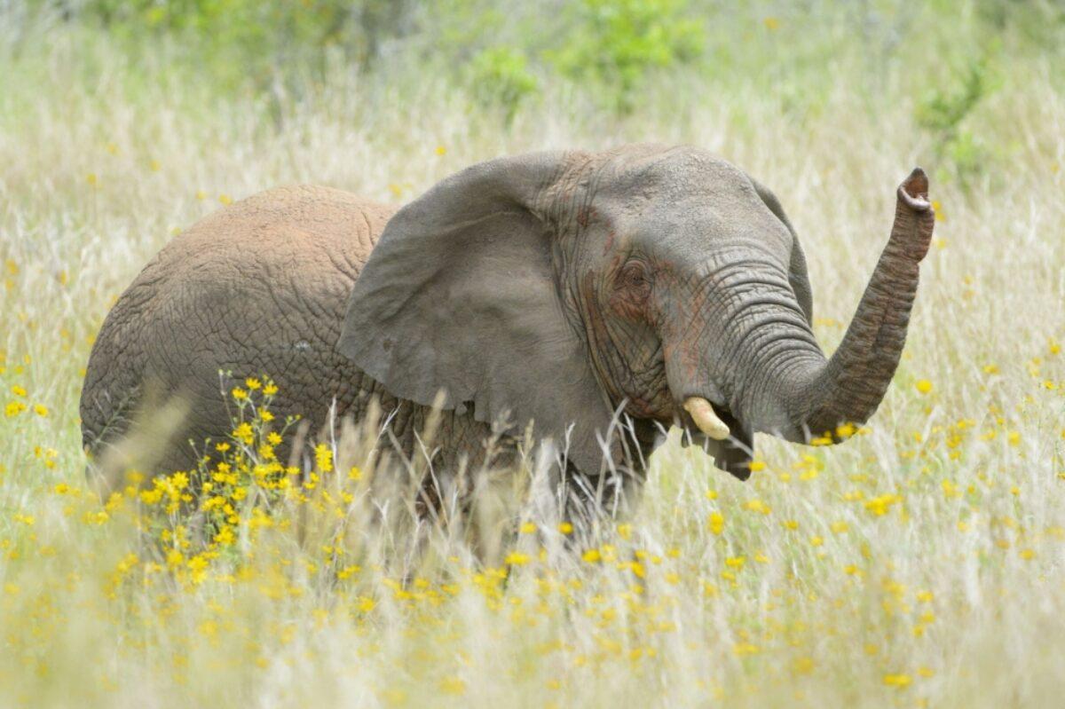 Rwanda Akagera elephant