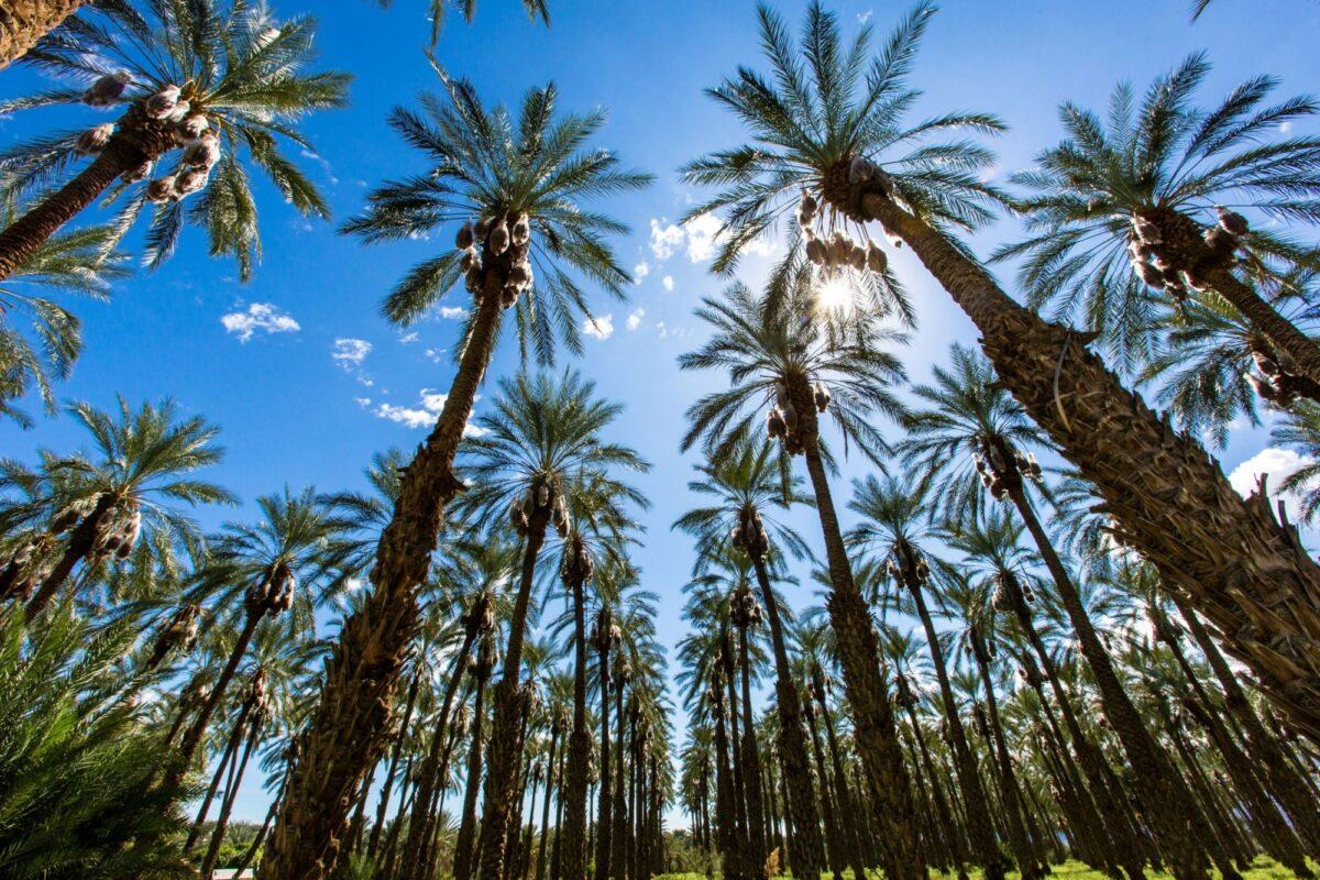 USA Palm Springs2