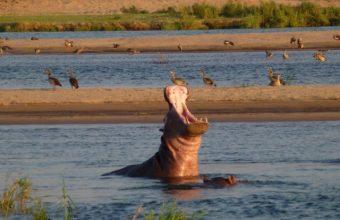 The Best Of Lower Zambezi Safari