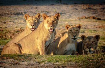 Zambia's Photographic Safari