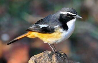 Armenia Birdwatching