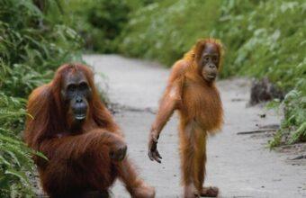 Off The Beaten Track in Borneo