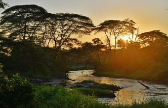 The Ultimate Uganda Private Safari