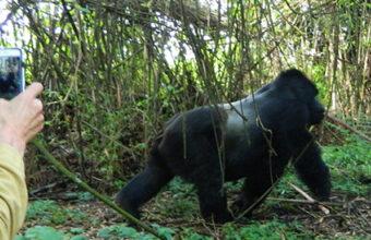 4 Days Gorilla Trekking Rwanda Safari