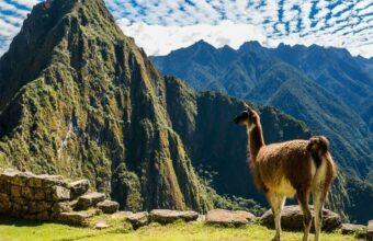 Machu Picchu Highlights