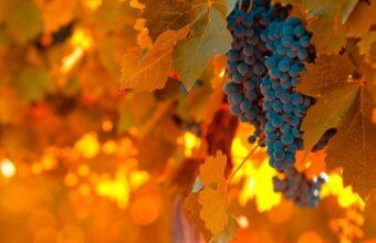 Santiago & Buenos Aires Wine Tasting