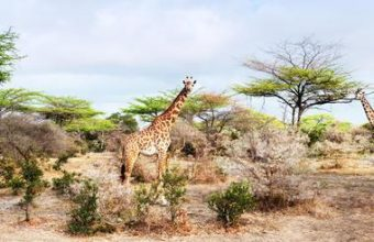 Southern Tanzania Adventure