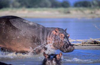 Wild Southern Tanzania