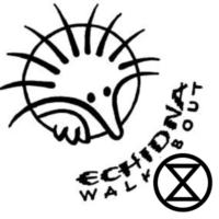 Echidna Walkabout
