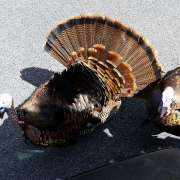 Turkey Slayers of North America