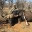 Dinkwe Safaris
