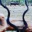 Superior African Hunting Safaris
