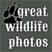 Great Wildlife Photos
