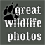 Great Wildlife Photos