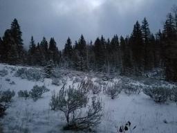 Elk Hunts 2018-03-18