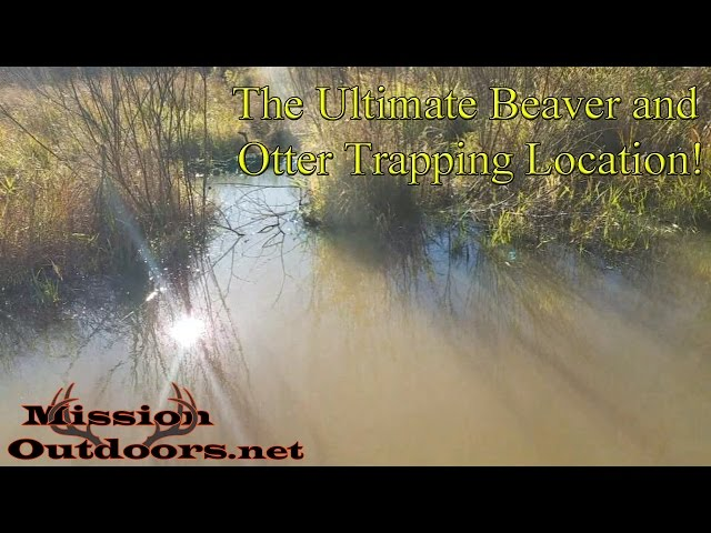 The Ultimate Beaver and Otter Trapping Location!