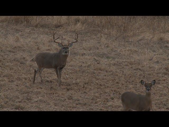 15-Yard Files: Aggressive Deer Calling Pulls 190-Inch Buck into Bow Range