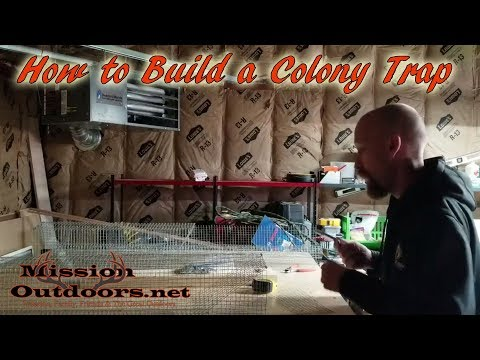 How to Build a Colony Trap for Muskrats