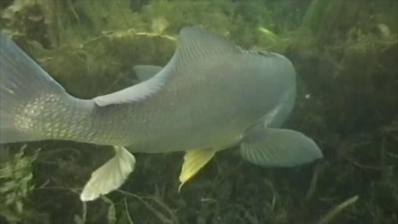 Snorkel Michigan: Vol 1 - Ep 6, The Drum Fish