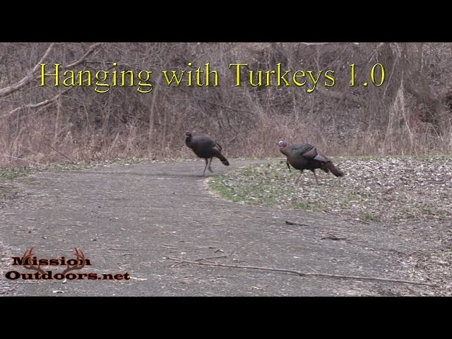 Hanging with Turkey's 1.0